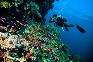Best Scuba Diving in the USA: Where to Go