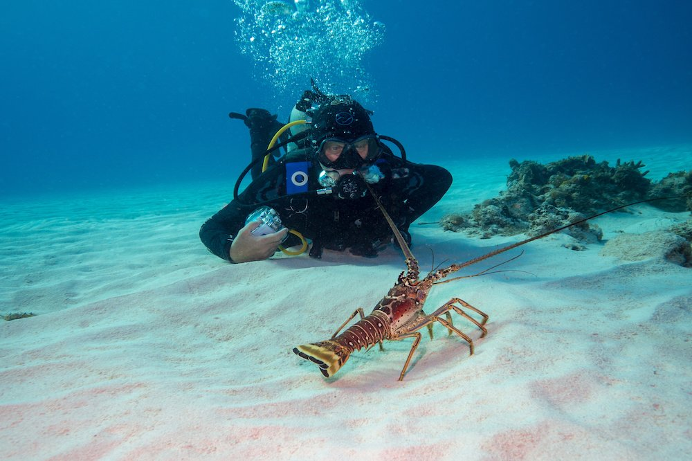 best place to scuba dive for beginners