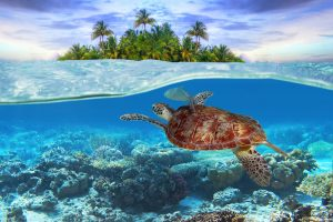 Best Scuba Diving in Carribean: Top Places to Visit