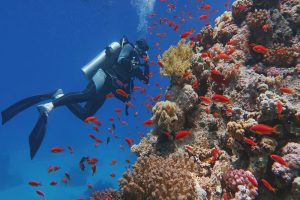 Scuba Diving Columbia: The Best Locations