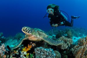 Best Scuba Diving Central America: Where to Go