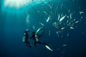 Diving in South Africa: The Locations You Can't Miss
