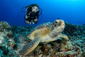 Scuba Diving Goa: The Best Places to Visit