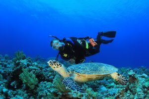 Scuba Diving in Maldives: What to Expect