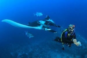 Sipadan Scuba Diving: Things You Need to Know
