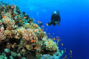 Diving in Bali: Things to Expect