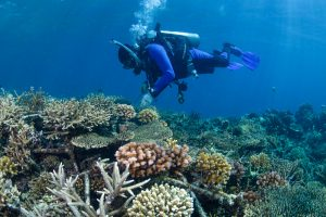 Diving Indonesia: Sites to Visit and More