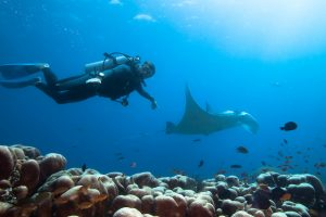 Diving Mozambique: Things to Keep in Mind