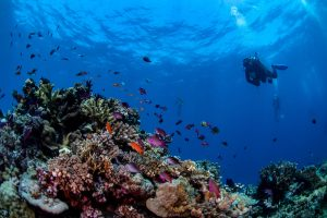 Wakatobi Diving: A Traveler's Guide